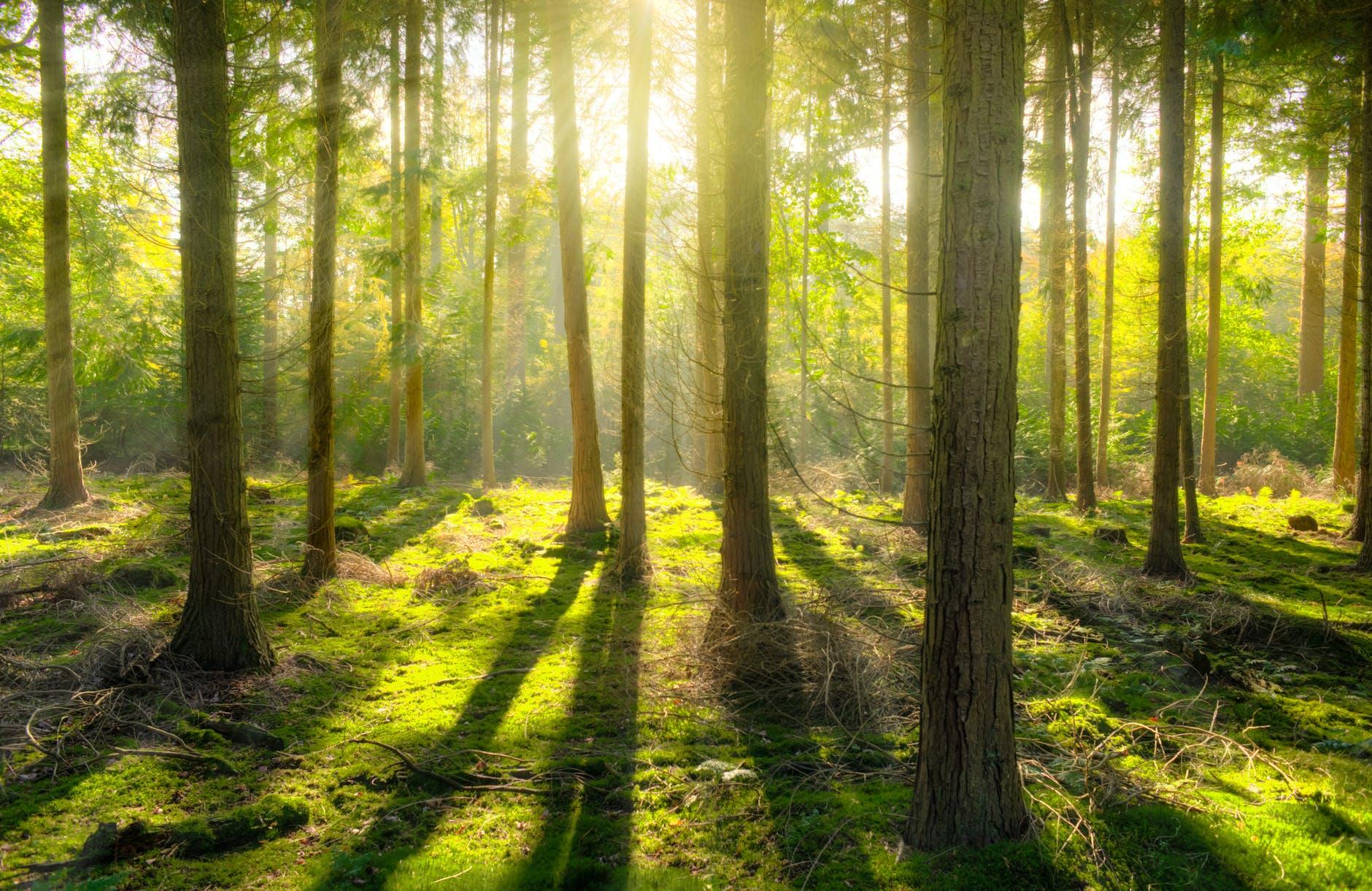 Hier in het bos – bij de boom