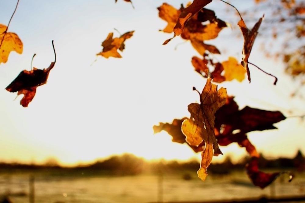 Herfst, ik voel je!