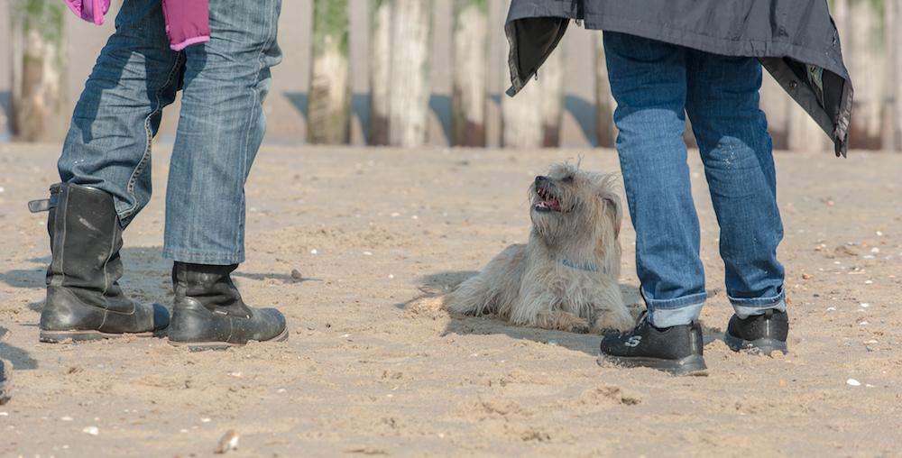 3 Redenen waarom jij wél het goede baasje bent voor je hond