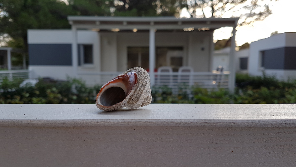 De roep van een schelp