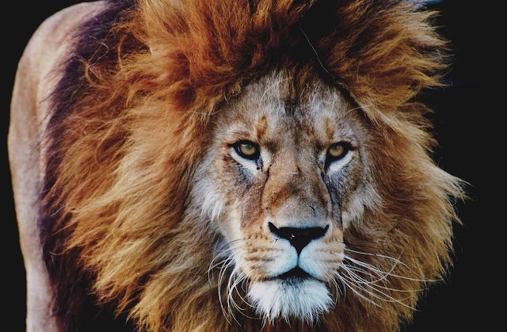 Oranje – lang leve de leeuw in jou