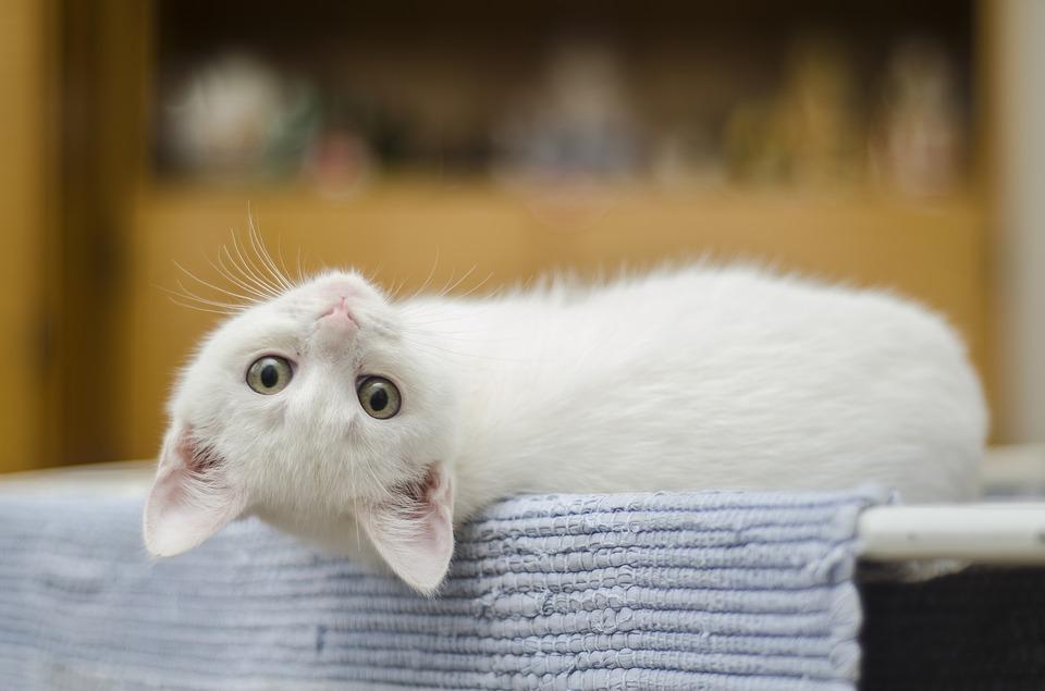 Kat in het bakkie, huiswerk plannen is een makkie – of toch niet?