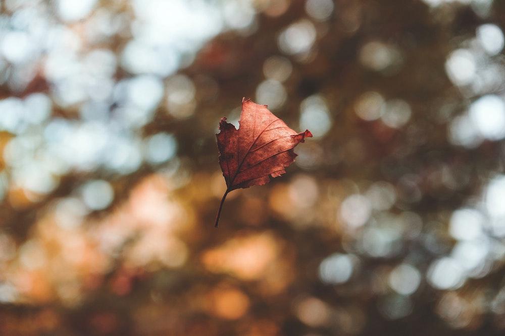 Herfst en volle maan: Een goed moment om los te laten