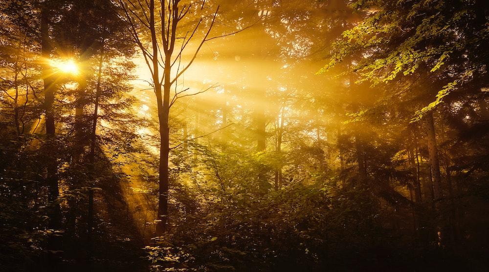 Folden – de draak van bos en woud