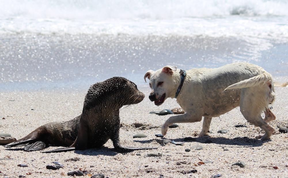 Ben jij meer een boshond of een zeehond?