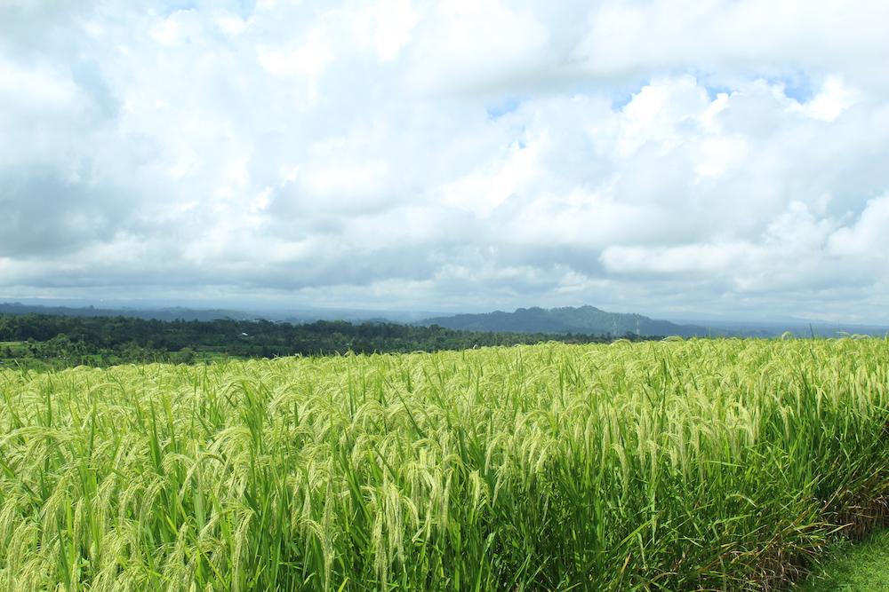 Mijn droom op Bali…