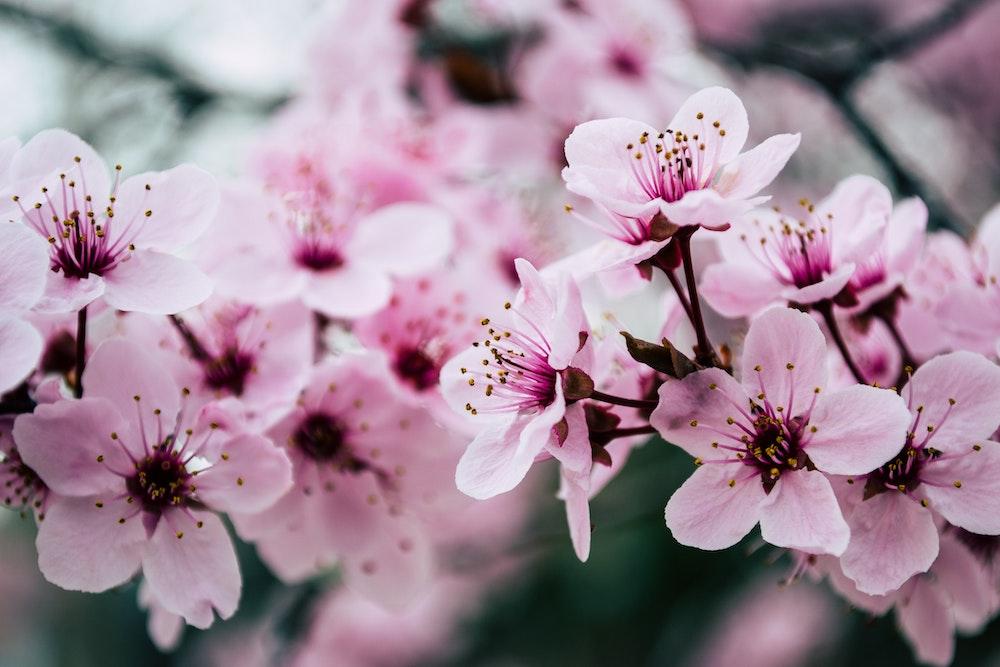 De lente is in aantocht – Zijn jij en je huid er klaar voor?