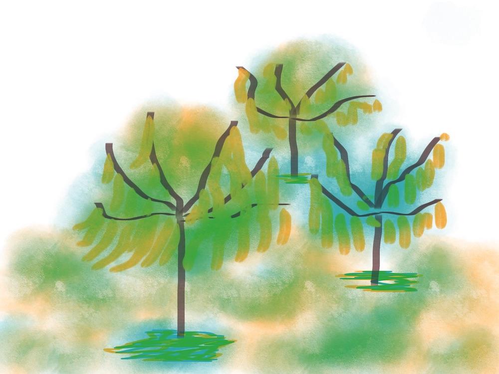 Mijn gesprek met de boom