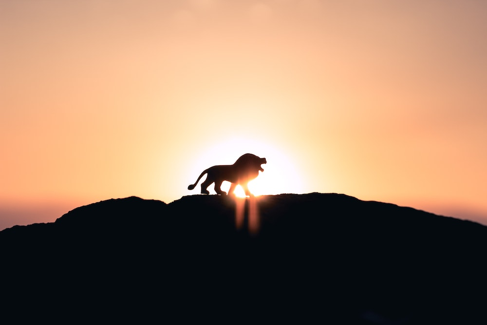 Nieuwe maan van 8 augustus – Ga mee door de Leeuwenpoort