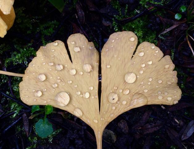 Ondernemen en leven in de energie van de seizoenen