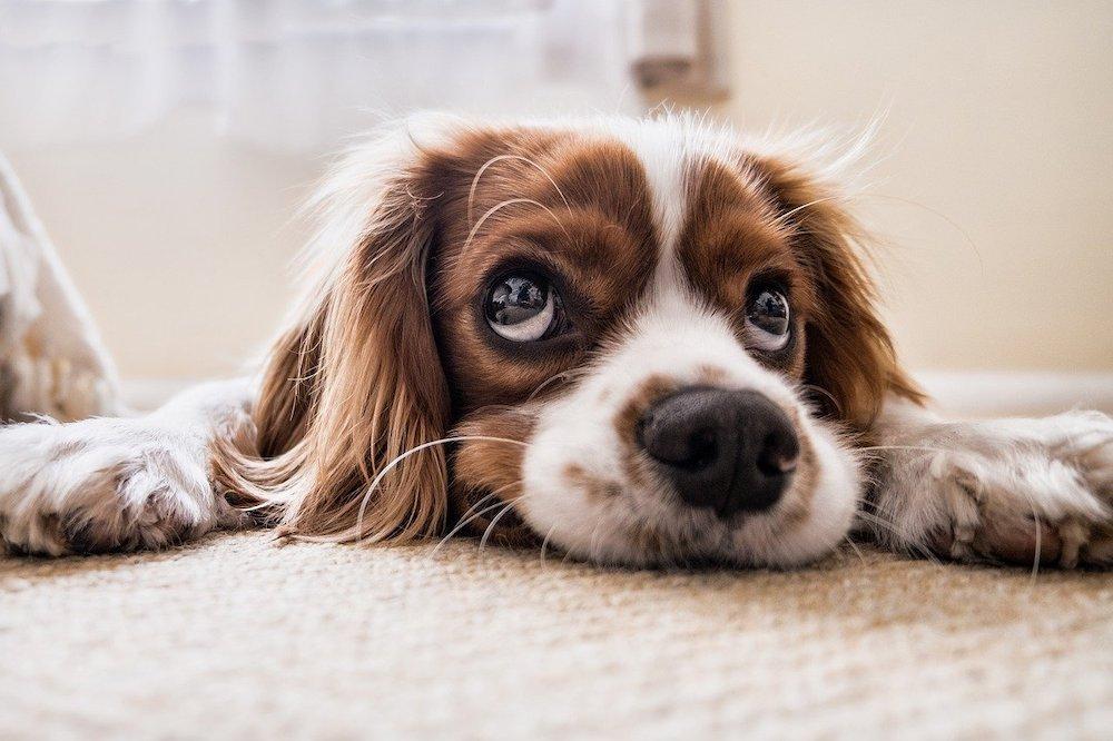 Welk verlangen moet jouw hond vervullen?